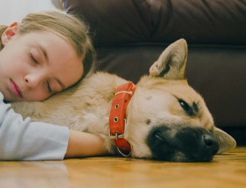The Benefits of Having a Pet