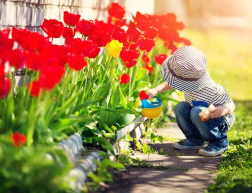 Celebrando la Primavera