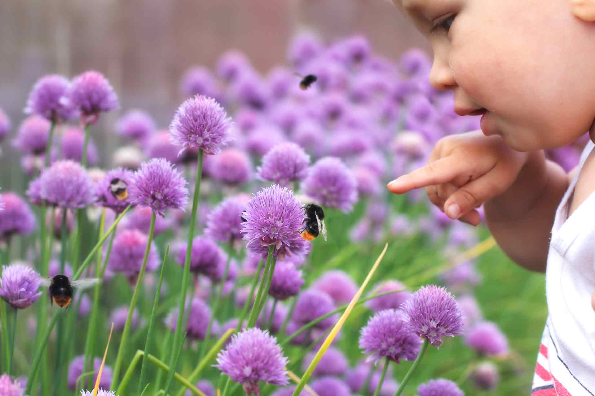 Creating-a-sensory-garden